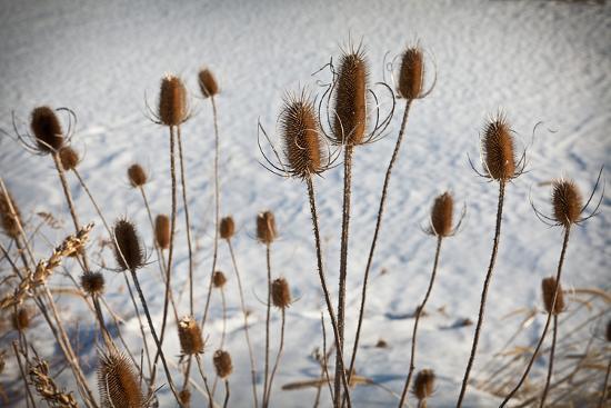 Prairie Seedheads-Steve Gadomski-Photographic Print