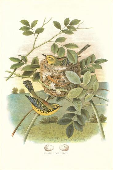 Prairie Warbler Nest and Eggs--Art Print