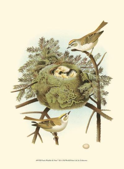 Prairie Warbler & Nest--Art Print