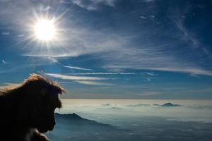 A Bonnet Macaque, Macaca Radiata, Overlooking Low Clouds and Mountains in the Sun by Prasenjeet Yadav