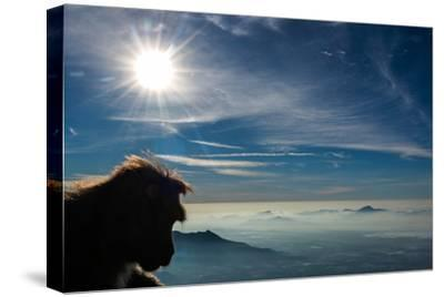 A Bonnet Macaque, Macaca Radiata, Overlooking Low Clouds and Mountains in the Sun