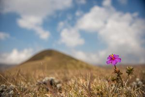 A Long Flower Blooms in a Grassland by Prasenjeet Yadav