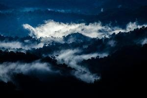 Mist Hangs over the Rain Forest in the Early Morning Sunrise by Prasenjeet Yadav