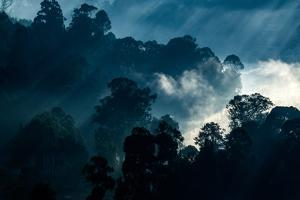 Mist Hangs over the Rain Forest of the Western Ghats by Prasenjeet Yadav