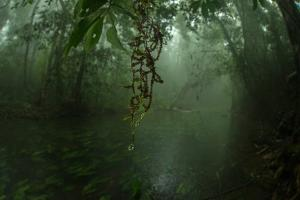 Water Drips Off Vines in a Rainforest by Prasenjeet Yadav