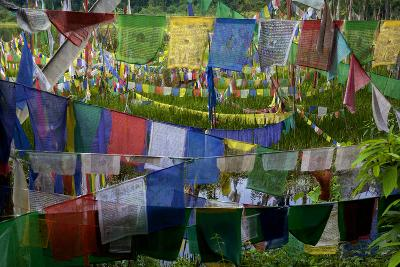 Prayer Flags At Khecheopalri Lake, Sacred To Hindus And Buddhists-Steve Winter-Photographic Print