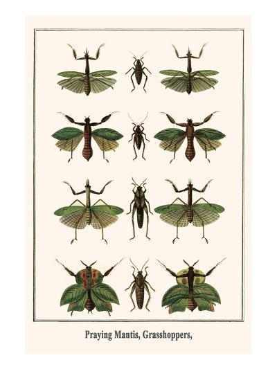 Praying Mantis, Grasshoppers,-Albertus Seba-Art Print