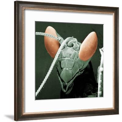 Praying Mantis Head--Framed Photographic Print