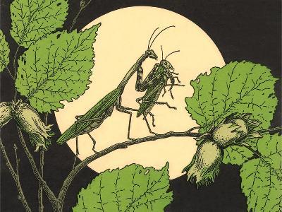 Praying Mantis with Grasshopper--Art Print