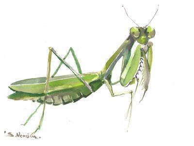 https://imgc.artprintimages.com/img/print/praying-mantis_u-l-f8xy4g0.jpg?p=0