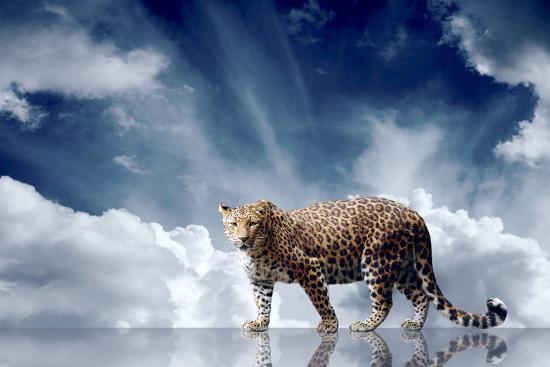 Predator Stay On The Sky Background-yuran-78-Photographic Print