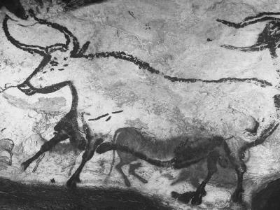 Prehistoric Cave Painting of an Animal-Ralph Morse-Photographic Print