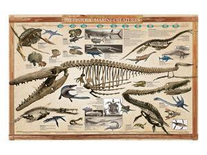 Prehistoric Marine Reconstruct