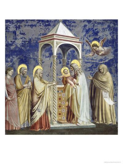 Presentation at the Temple-Giotto di Bondone-Giclee Print