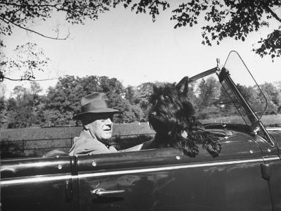 President Franklin D. Roosevelt Driving in His Convertible with His Dog Fala Through Hyde Park--Photographic Print