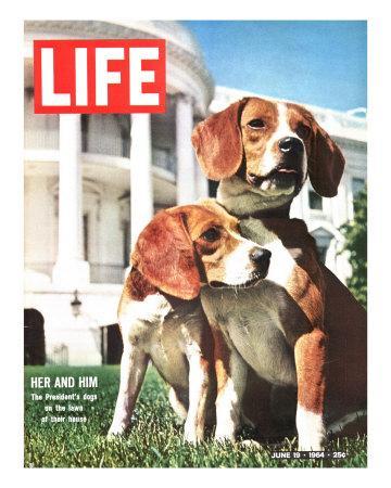 https://imgc.artprintimages.com/img/print/president-johnson-s-beagles-june-19-1964_u-l-p69awx0.jpg?p=0