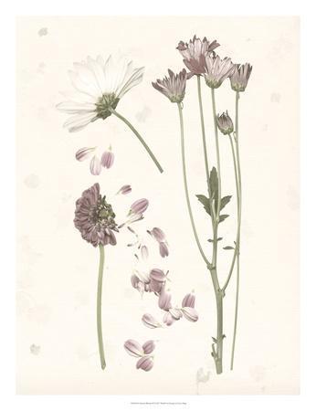 https://imgc.artprintimages.com/img/print/pressed-blooms-ii_u-l-f97ioq0.jpg?p=0