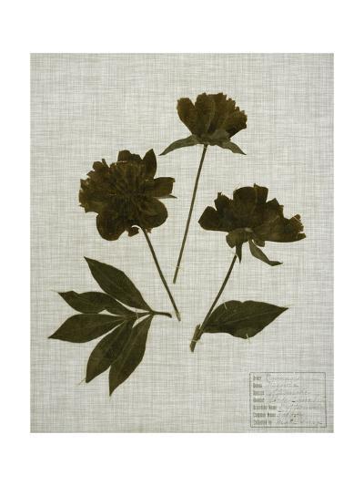 Pressed Leaves on Linen II-Vision Studio-Art Print