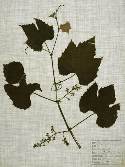 Pressed Leaves on Linen III-Vision Studio-Art Print