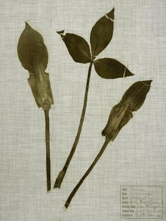 Pressed Leaves on Linen IV-Vision Studio-Art Print