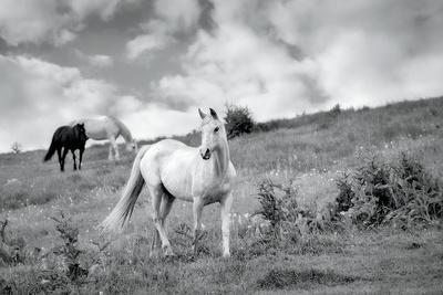 https://imgc.artprintimages.com/img/print/pretty-horses_u-l-q1awrt90.jpg?p=0