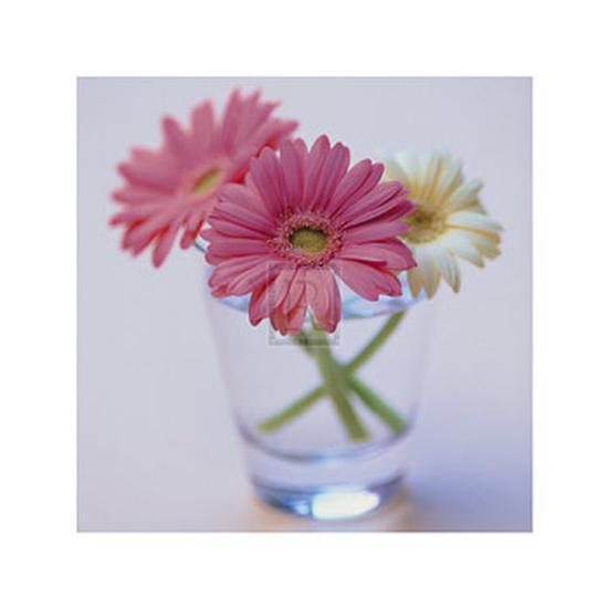 Pretty in Pink--Art Print
