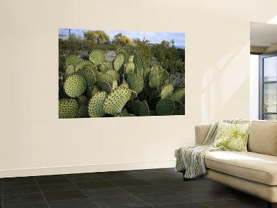 Prickly Pear Cactus Near Willows & Windmill at Dugout Well, Big Bend National Park, Texas, USA-Scott T^ Smith-Giant Art Print