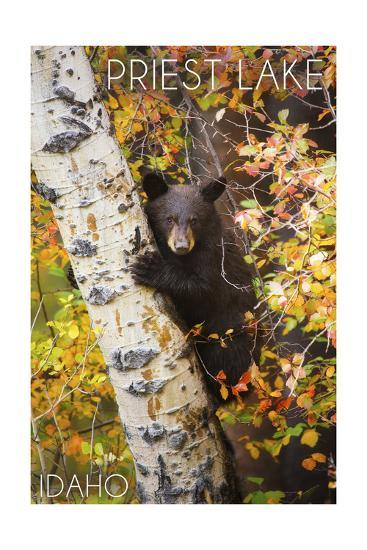 Priest Lake, Idaho - Bear Cub in Tree-Lantern Press-Art Print