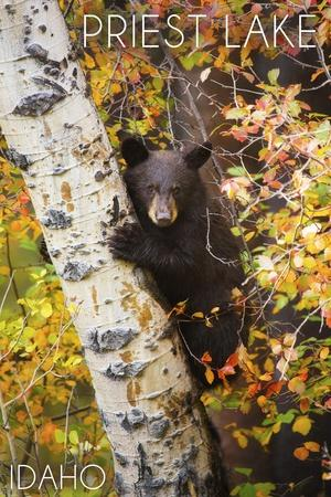 https://imgc.artprintimages.com/img/print/priest-lake-idaho-bear-cub-in-tree_u-l-q1gqom20.jpg?p=0