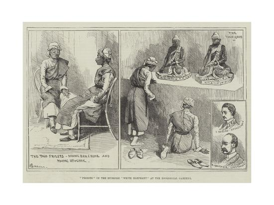 Priests of the Burmese White Elephant at the Zoological Gardens-Alfred Courbould-Giclee Print