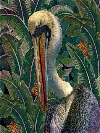 https://imgc.artprintimages.com/img/print/primal-pelicana_u-l-q1ap9t40.jpg?p=0