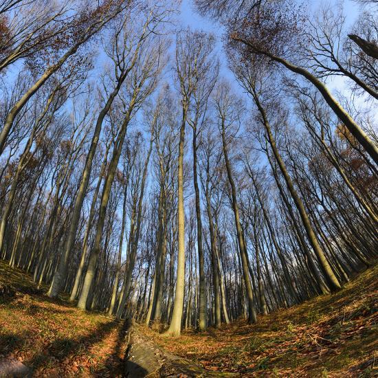 Primeval Forest With Fallen Trees Austria Viennese Wood Mauerbach Photographic Print By Volker Preusser Art Com