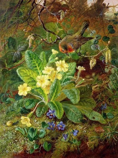 Primrose and Robin-William John Wainwright-Giclee Print