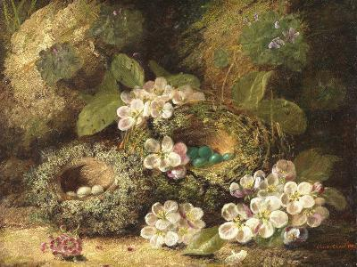 Primroses and Bird's Nests on a Mossy Bank, 1882-Oliver Clare-Giclee Print