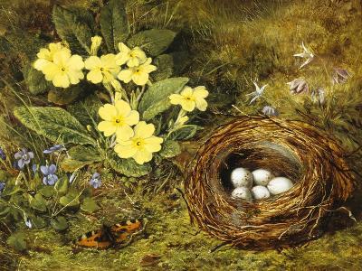 Primroses with a Bird's Nest-H. Barnard Grey-Giclee Print