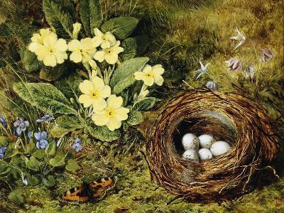 Primroses with a Bird's Nest-H. Bernard Grey-Giclee Print