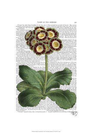 https://imgc.artprintimages.com/img/print/primula-auricula-red_u-l-f86oy40.jpg?p=0