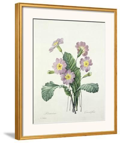 Primula (Primrose), Engraved by Bessin, from 'Choix Des Plus Belles Fleurs', 1827-Pierre-Joseph Redout?-Framed Giclee Print