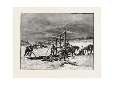 Prince Edward Island, Digging Mussel Mud, Canada, Nineteenth Century--Giclee Print