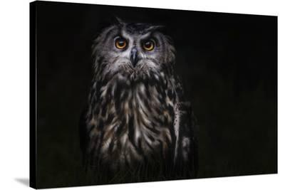 Prince Of The Night-Martine Benezech-Stretched Canvas Print