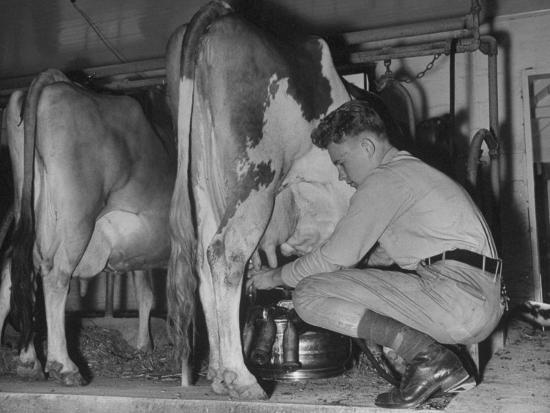 a-boy-milking-a-cow