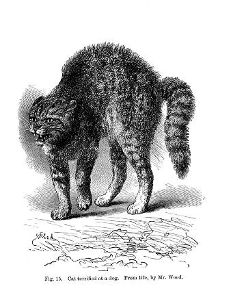 a-cat-terrified-by-a-dog-1872