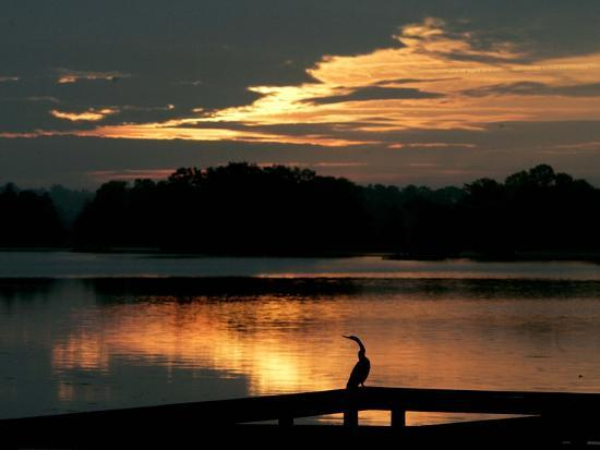 a-cormorant-is-silhouetted-against-the-waters-of-lake-talquin