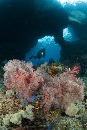 a-diver-approaches-a-gorgonian-sea-fan-indonesia