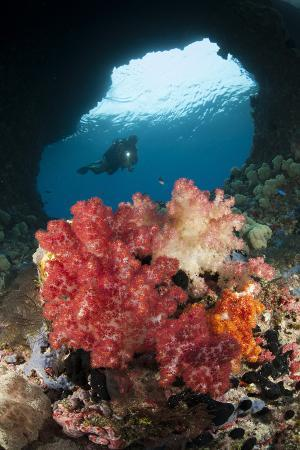 a-diver-approaches-soft-corals-raja-ampat-west-papua-indonesia