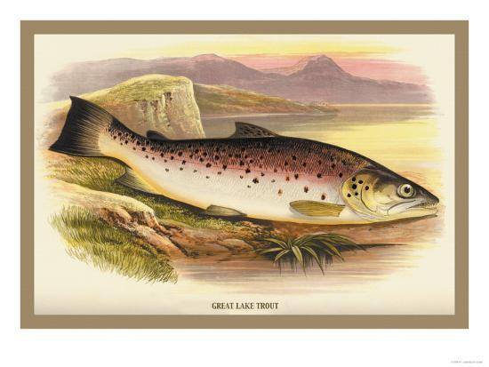 a-f-lydon-great-lake-trout