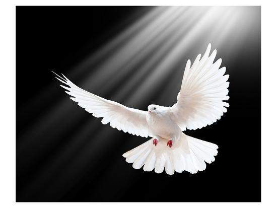 a-free-flying-white-peace-dove