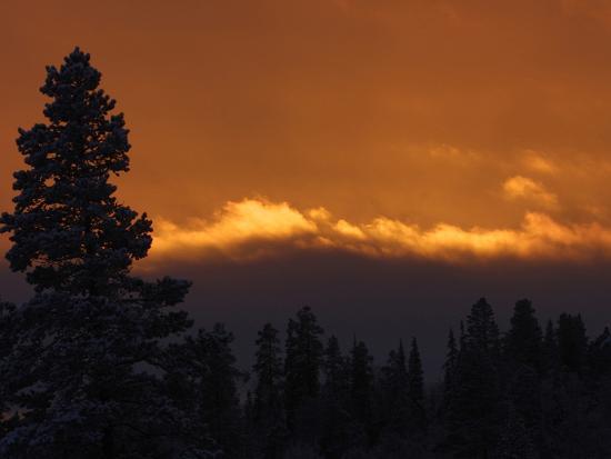 a-golden-sunset-behind-a-dark-pine-tree-forest