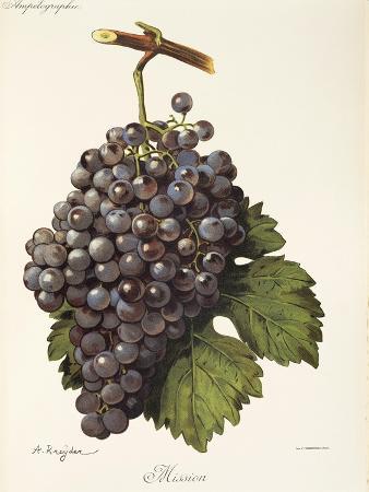 a-kreyder-mission-grape