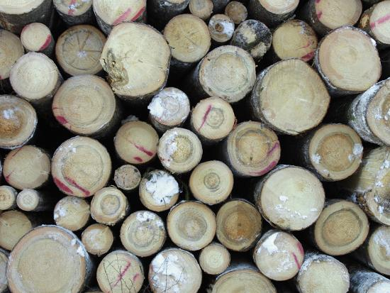 a-large-pile-of-frozen-cut-logs-with-snow